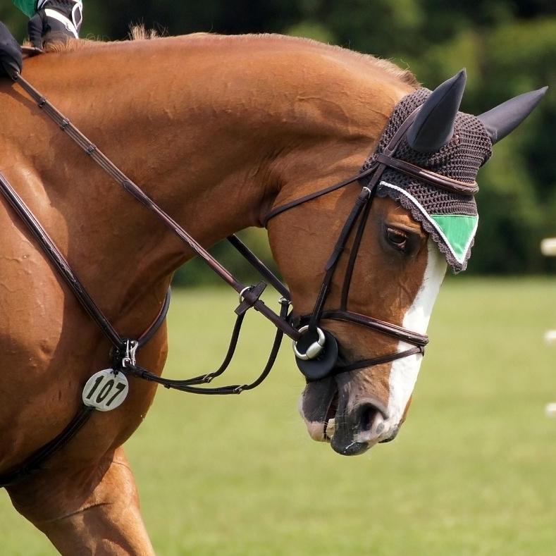 Турнир по конному спорту, конкур
