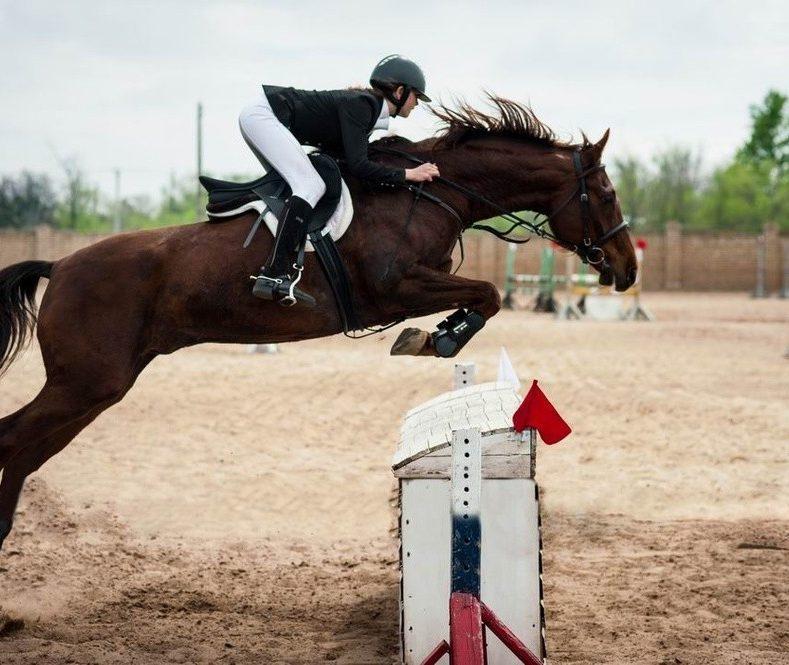 Чемпионат Брянской области по конному спорту (конкур)