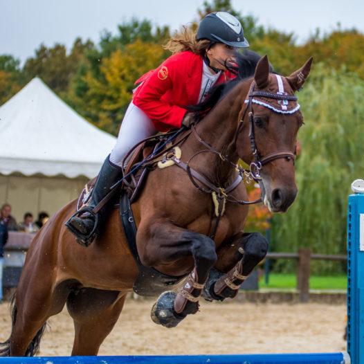 Кубок Брянской области по конному спорту